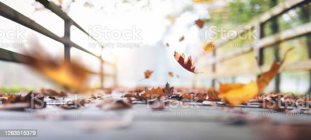 Photo of Falling To The Ground