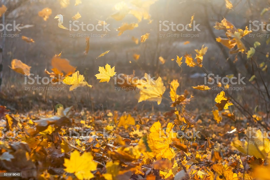 Falling yellow, orange and red autumn leaves in beautiful nature stock photo