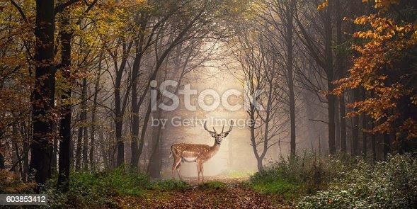 istock Fallow deer in a dreamy forest scene 603853412