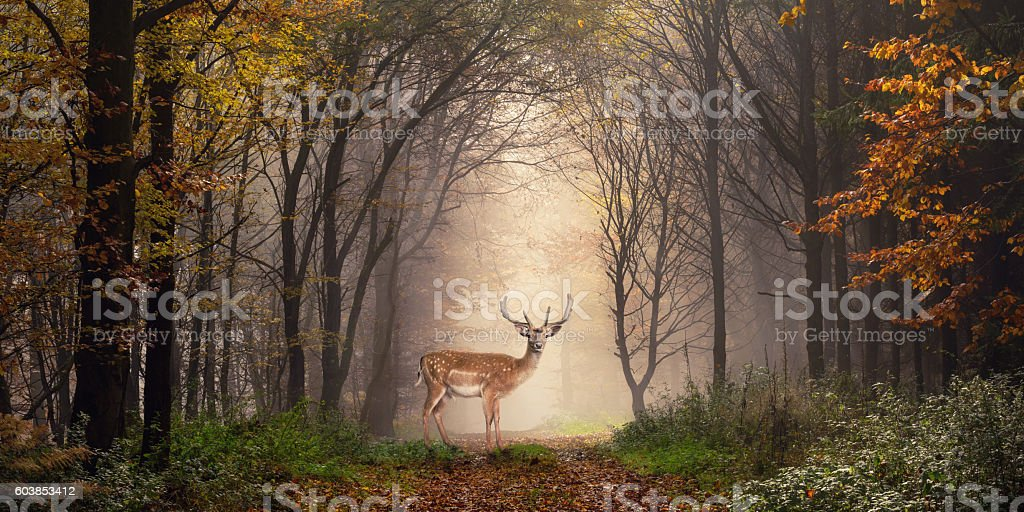 Fallow deer in a dreamy forest scene stock photo