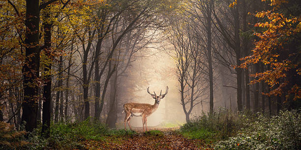 fallow deer in a dreamy forest scene - waldtiere stock-fotos und bilder