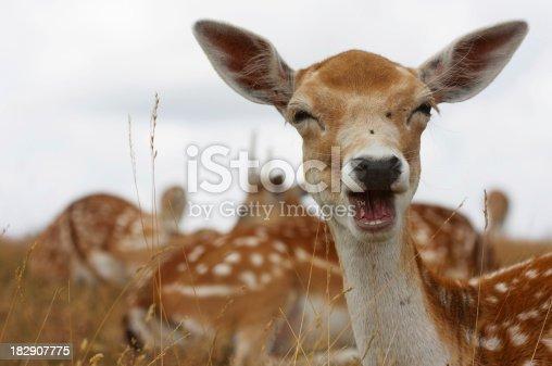 istock Fallow Deer Portrait 182907775