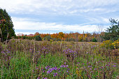 Fall's colorful meadow and trees in park. Ontario, Canada