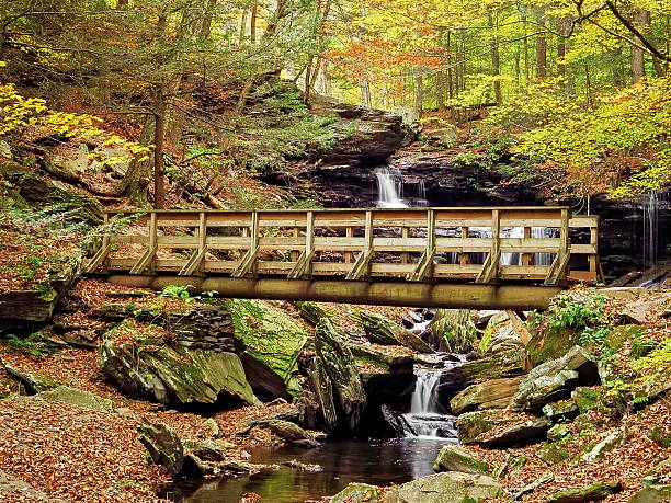 Falls Trail at Ricketts Glen State Park stock photo