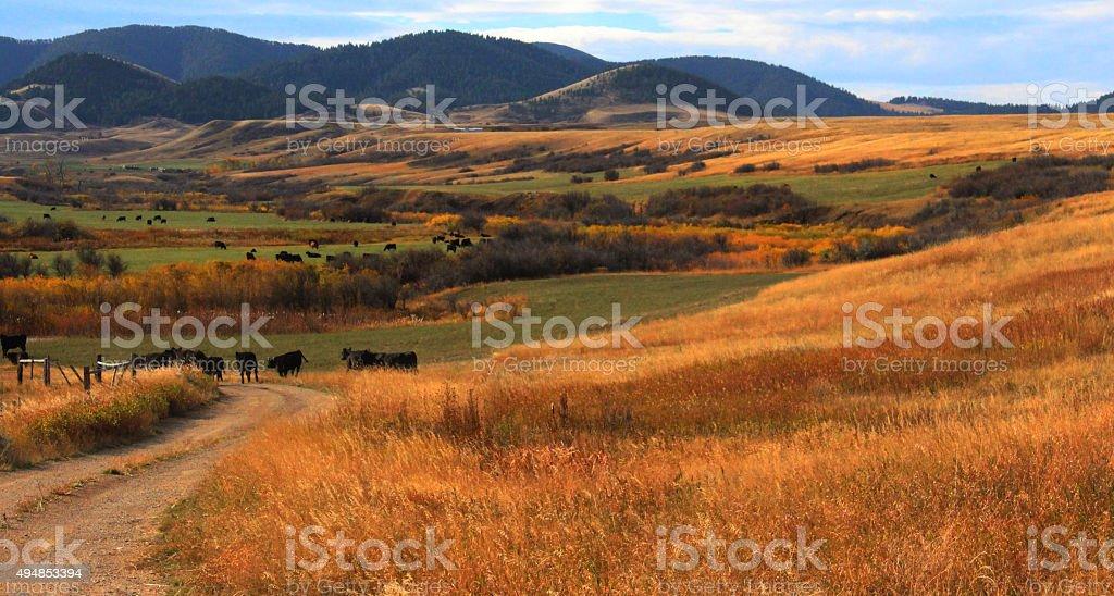 Fall/summer colors - Montana stock photo
