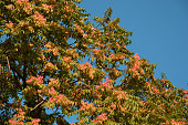 Macro shot of leaves.