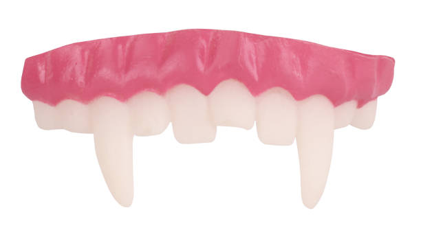 False vampire teeth for costume ball This is a fake vampire jaw. fang stock pictures, royalty-free photos & images