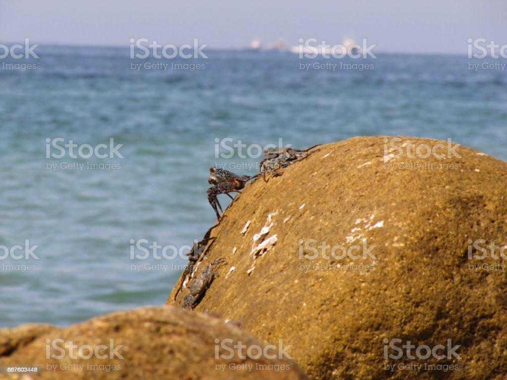 Familia de cangrejos stock photo