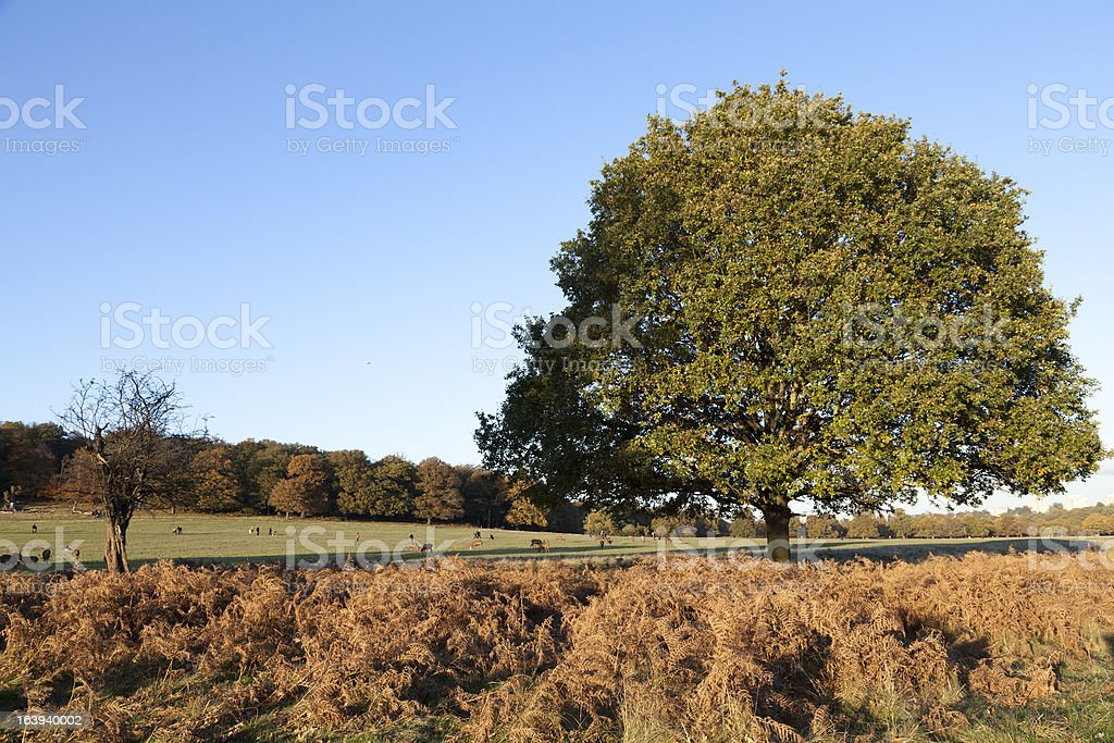 Families and deer in Richmond Park stock photo