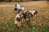 Family Adventure with little pony and donkey
