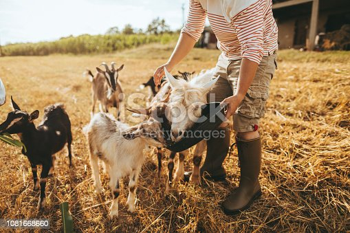Cute little boy and his family on a family farm, spending a day with the animals