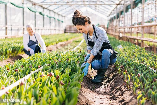 Senior and young women working in a greenhouse