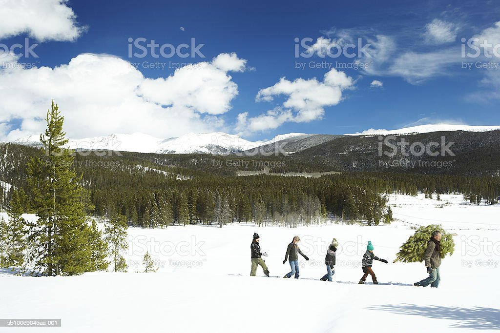 Family carrying Christmas tree in forest royalty free stockfoto