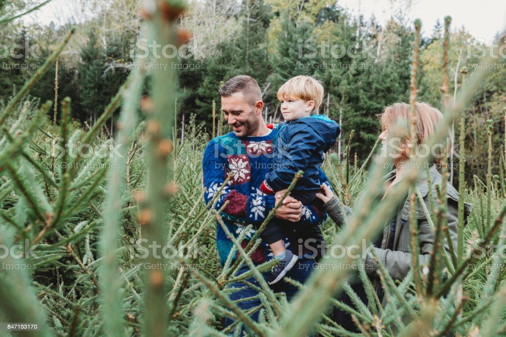 Family choosing a Christmas tree together stock photo