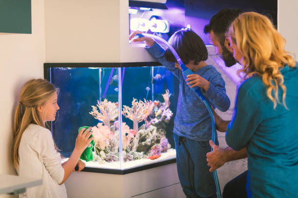family cleaning reef tank - home aquarium stock pictures, royalty-free photos & images