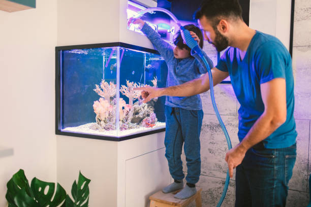 family cleaning reef tank - home aquarium stock photos and pictures