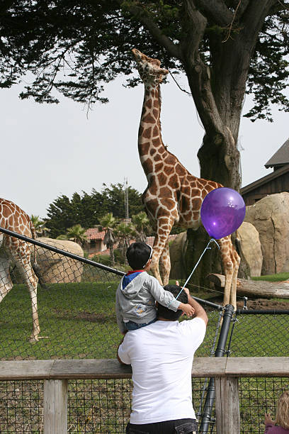 family day at the zoo - zoo stock pictures, royalty-free photos & images