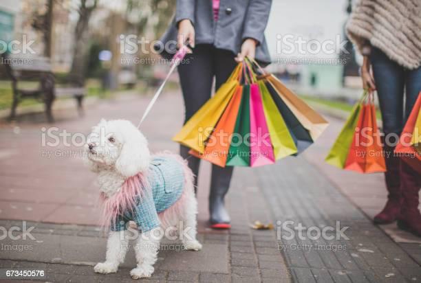 Family dog picture id673450576?b=1&k=6&m=673450576&s=612x612&h=vflf3d7cztu3dbhmembbjfwnf6t4yojmzijffz1tzyq=