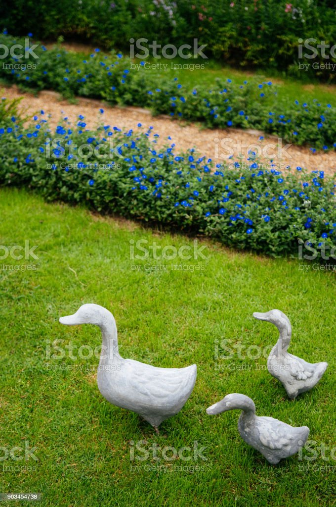 Family Ducks on green grass lawn in garden - Zbiór zdjęć royalty-free (Aromaterapia)