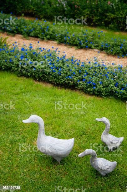 Rodzinne Kaczki Na Zielonym Trawniku Trawiastym W Ogrodzie - zdjęcia stockowe i więcej obrazów Aromaterapia