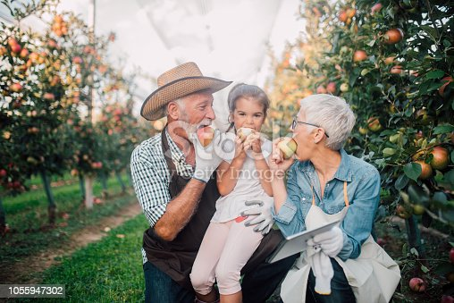 1063236916 istock photo Family eating apples in the garden 1055947302