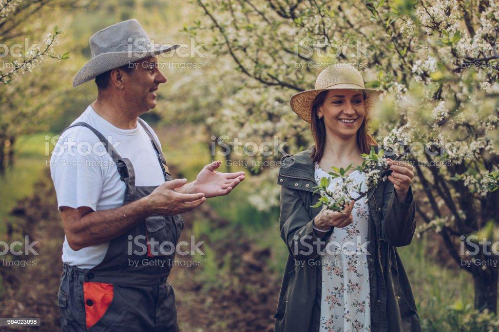 Family enjoying in orchard - Royalty-free Active Seniors Stock Photo