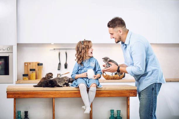 Family, father and sweet daughter happy together with little fluffy kittens in the kitchen in a bright home interior stock photo
