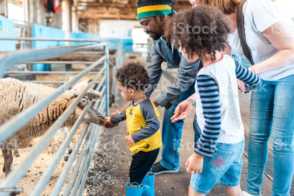Family feeding animals on a farm stock photo