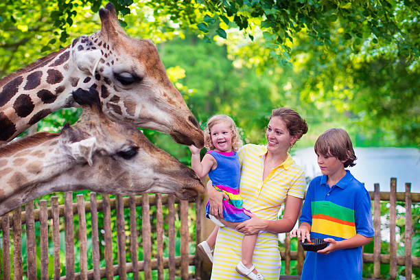 Family feeding giraffe in a zoo Happy family, young mother with two children, cute laughing toddler girl and a teen age boy feeding giraffe during a trip to a city zoo on a hot summer day zoo stock pictures, royalty-free photos & images