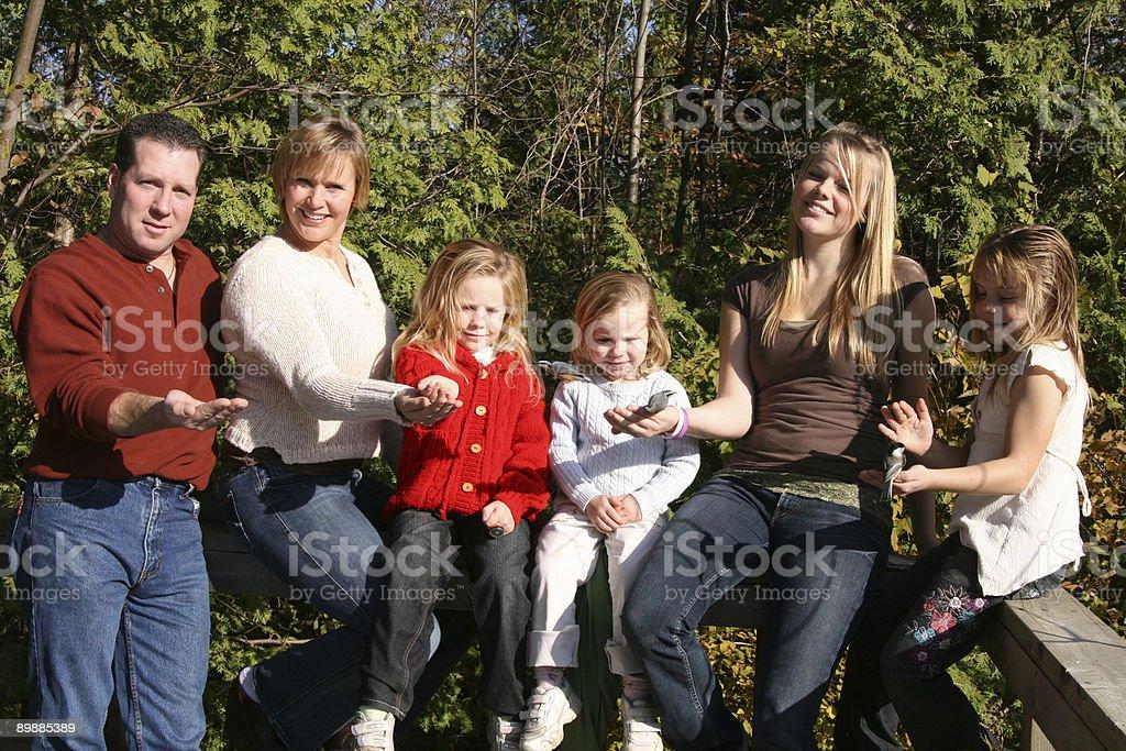 Семья подачи the Birds Стоковые фото Стоковая фотография