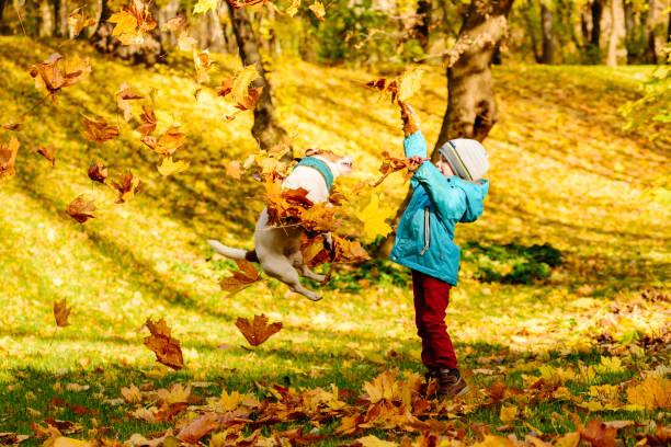 S'amuser en famille, heure au parc automne avec enfant et chien d'animal familier - Photo
