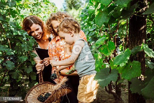Family Harvesting Vegetables From Their Small Home Garden