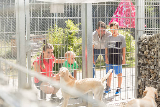 Family getting to know dogs in animal shelter stock photo