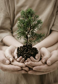 """A small tree cupped in a child's hands, supported by mother and father."""