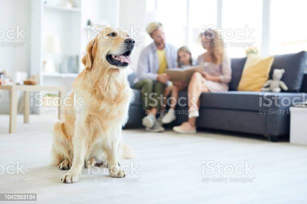 Family guardian picture id1042553134?b=1&k=6&m=1042553134&s=612x612&h=dknqwnzgxgyu6dyjkuvwqe7ctwcww3h49fdglyqpdfc=