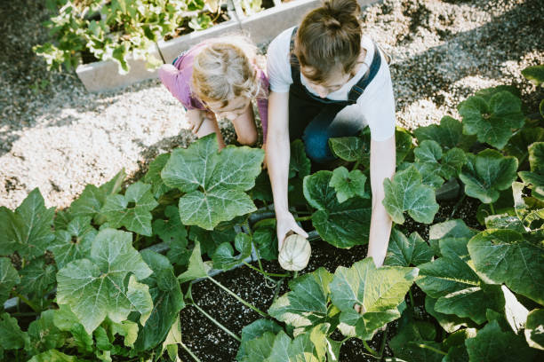 Family Harvesting Vegetables From Garden at Small Home Farm