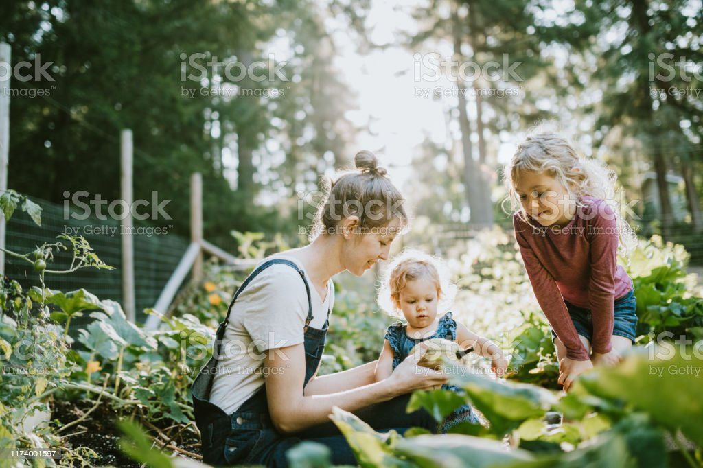 Family Harvesting Vegetables From Garden at Small Home Farm - Royalty-free 12-23 Months Stock Photo