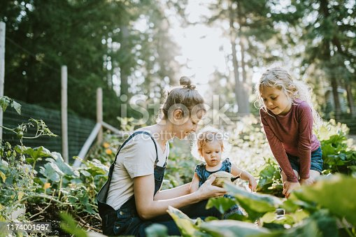 A mother and her children pick fresh squash from their garden on a warm late summer morning at their home.  Shot in Washington state.