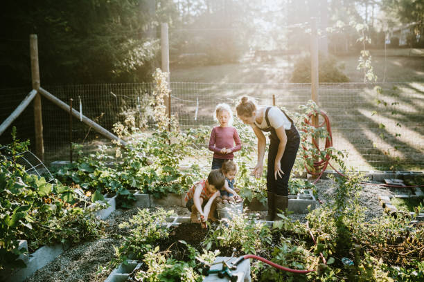 family harvesting vegetables from garden at small home farm - warzywo korzeniowe zdjęcia i obrazy z banku zdjęć