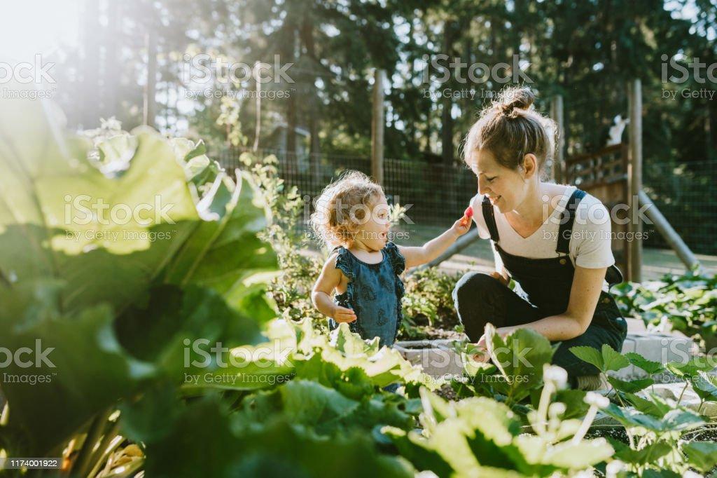 Famille récoltant des légumes du jardin à la petite ferme à la maison - Photo de 12-23 mois libre de droits