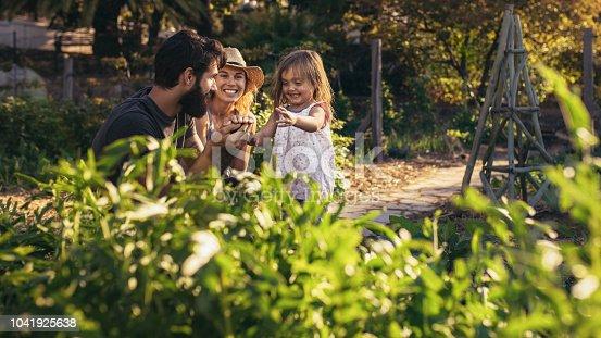 istock Family having fun in their farm 1041925638