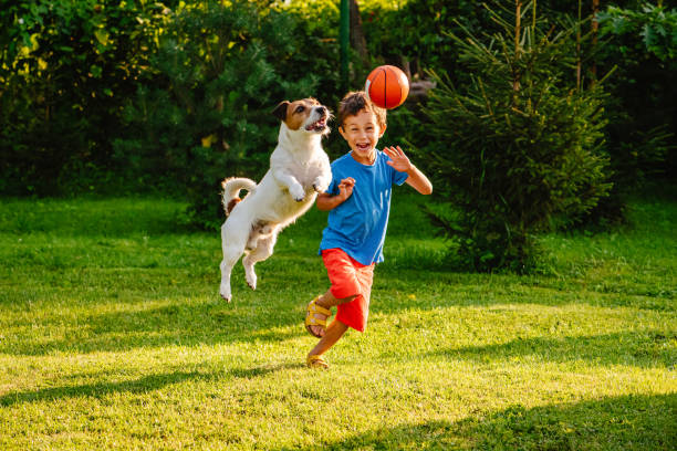 Family having fun outdoor with dog and basketball ball Jack Russell Terrier jumping to catch ball leisure equipment stock pictures, royalty-free photos & images