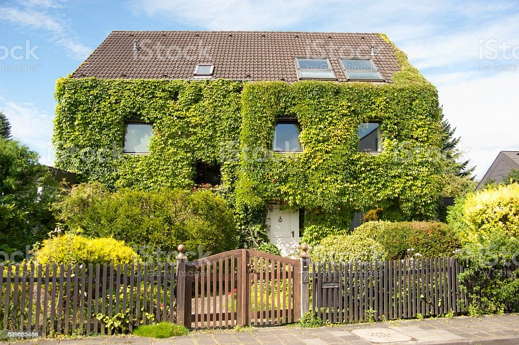 family home real estate with ivy in summer stock photo