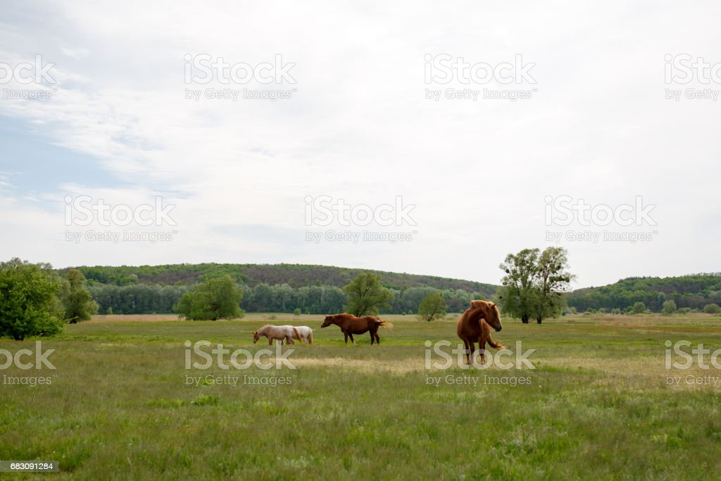 Family horses on a green meadow foto de stock royalty-free