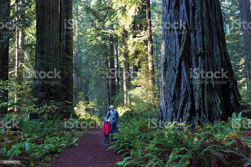 family in redwood forest stock photo