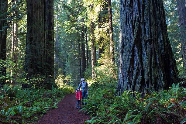 famiglia nella foresta di redwood - riserva naturale parco nazionale foto e immagini stock