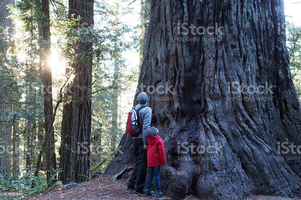 family in redwoods forest stock photo