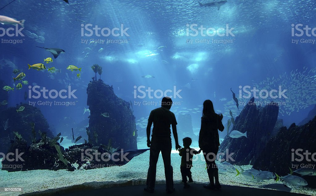Family in silhouette standing in front of aquarium stock photo