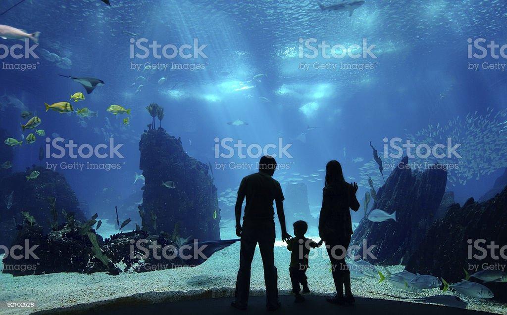 Unterwasser-Familie – Foto
