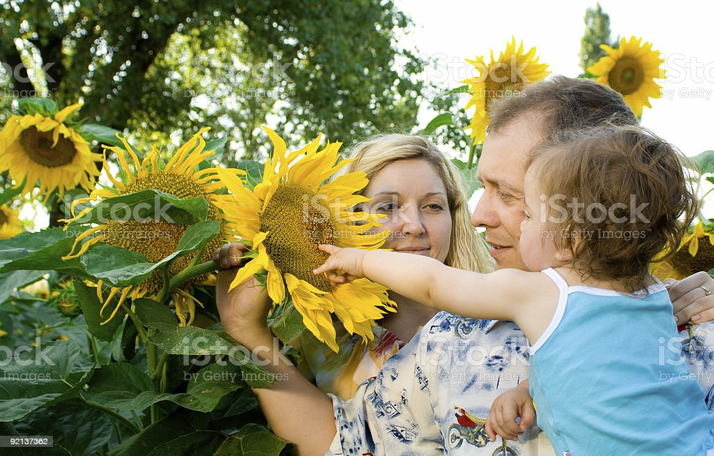 Family in sunflowers royalty-free stock photo
